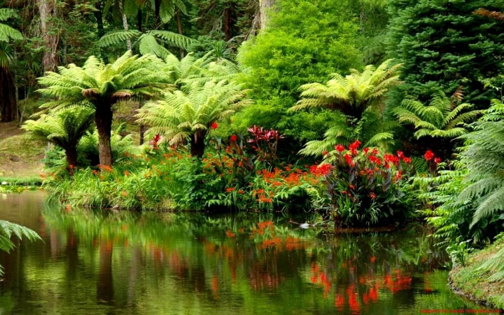 Nature___Forest_Tropical_forest_on_the_river_bank_094990_.jpg